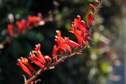 Desert Reds1