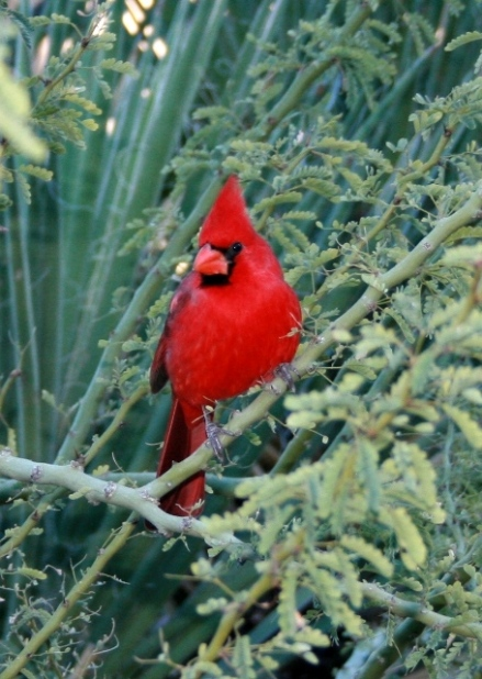 Desert Reds2