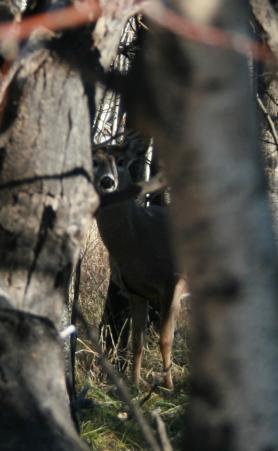 deer-wy-trip.jpg
