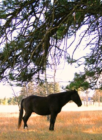 horse-wy-trip.jpg