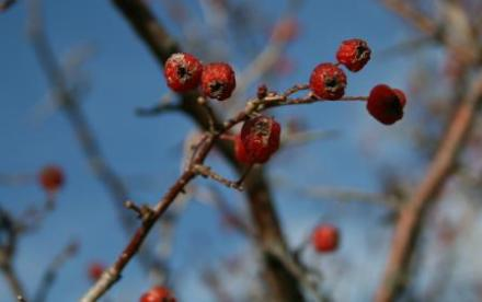 red-berries-wy-trip.jpg