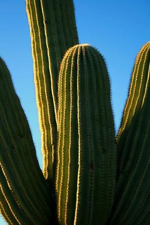 saguaro1.jpg